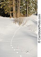 足跡, 中に, ∥, 雪