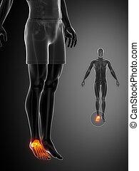 足首, x--ray, 黒, 骨走査