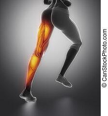 足, 女性, 筋肉, 解剖学, ビューを支持しなさい