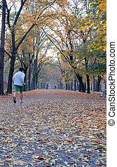 跑, 在, 秋天