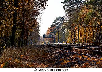 距離, シグナル, 秋, ラニングは追跡する, によって, 森林, ベルリン, 鉄道, 風景, germany.