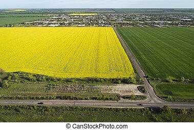距離, 航空写真, ?ars, フィールド, 黄色緑, 村, 行きなさい, ビュー。, 菜の花, road.