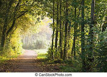 路径, 森林