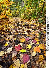 路径, 森林, 落下