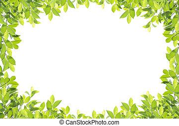 路徑, 剪, 葉子, 被隔离, 背景。, 綠色, included., 白色, 邊框