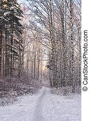 路徑, 在, 冬天, 森林