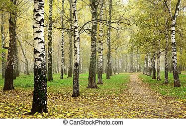 路徑, october, 小樹林, 早晨, 秋天, 樺樹, 橫過, 薄霧