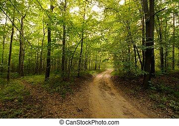 路, 在, 森林