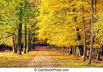 路, 在, 秋天, 公園