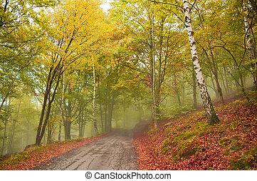 路, 在, the, 有霧, 森林, 在, 秋天