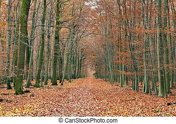 路, 在, the, 秋季森林