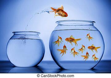 跳躍, 幸福に, fish