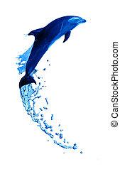 跳高, 海豚