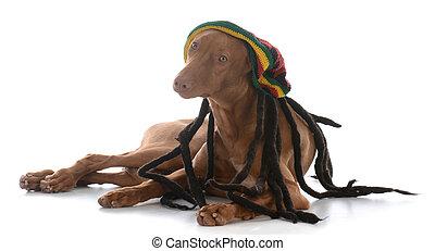 身に着けていること, かつら, マレ, rastafarian, pharoah, 猟犬