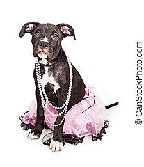 身に着けていること, かわいい, ピンクのチュチュ, 子犬