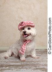 身に着けていること, かわいい, 帽子, 犬, スカーフ