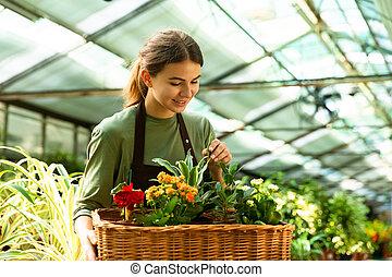 身に着けていること, エプロン, 20s, 女, 仕事, 温室, イメージ, 花屋, 間, 届く, かなり, バスケット, 植物