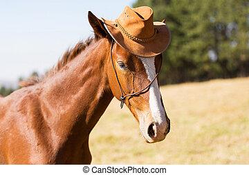 身に着けていること, 馬, 帽子, カウボーイ
