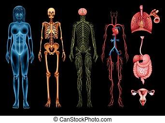 身體, 系統, 人類