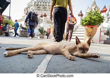 身體, 舔, 街道, 放松, 貓, itself, 打掃, 早晨, 它