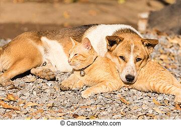 躺, 狗, 一起, 貓
