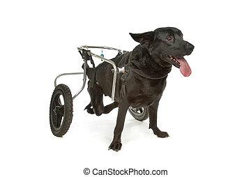 車椅子, 犬