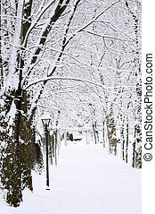車線, 中に, 冬, 公園