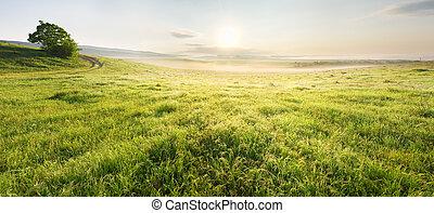 車線, 中に, 牧草地, そして, sunrise.