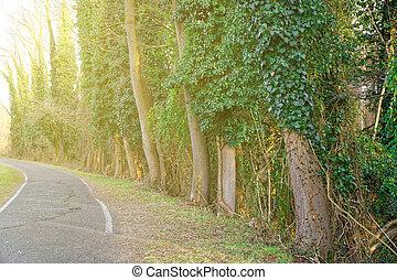 車線, 春, 動くこと, dawn., 落葉性, によって, 森林