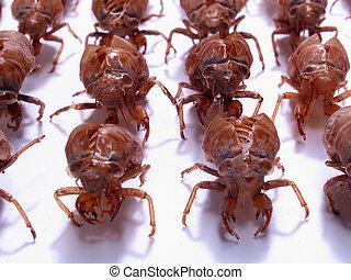 軍, 昆虫, 蝉, army:, 殻