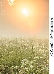 輝き, 金, 牧草地, ライト, によって, 森林, 霧が濃い