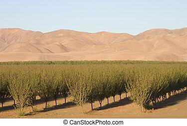 農地, カリフォルニア, #6