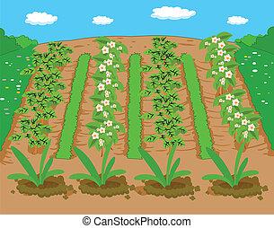農場, そして, 背景, 風景