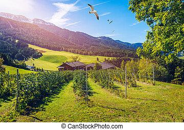 農場, イタリア, フィールド, 風景, 青, italy., farmhouse., 田園, 村, village., 夏, 空, 景色, day.
