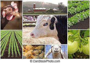 農場, コラージュ, 動物