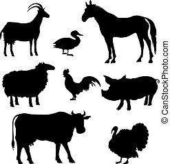 農場, シルエット, 動物