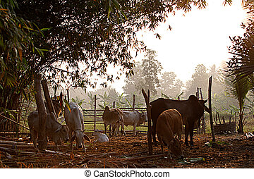 農場, 動物, 母牛