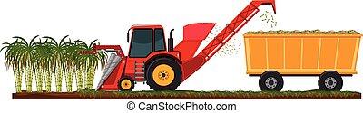 農場, 収穫する, 杖, 砂糖