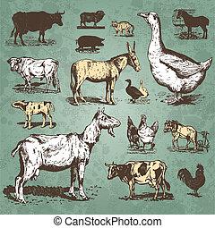 農場, 型, セット, 動物, (vector)
