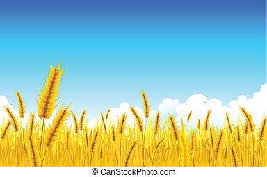 農場, 小麦