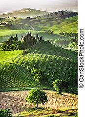 農場, ......的, 橄欖, 小樹林, 以及, 葡萄園