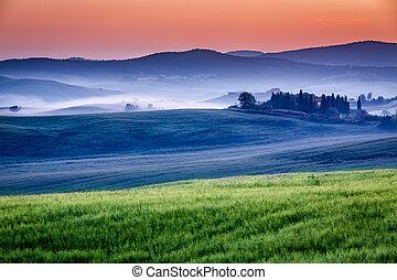 農場, ......的, 橄欖, 小樹林, 以及, 葡萄園, 在, 有霧, 日出