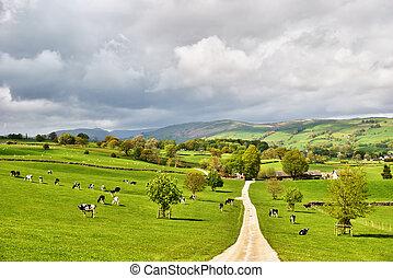 農場, 絵のよう, 搾乳場, 英語