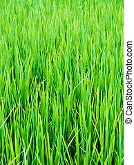 農場, 緑, 葉