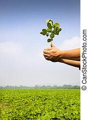 農場, 農夫, 苗木, 手を持つ