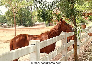 農場, 馬