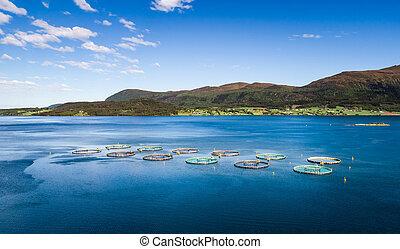 農場, 鮭, 釣り, 航空写真, fpv, 無人機, photography.