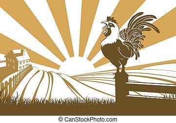 農場, 鶏, 鳴く, 夜明け