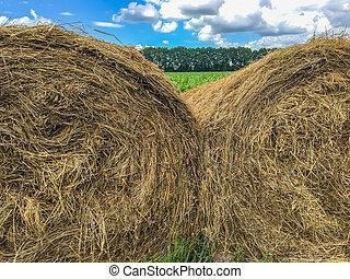 農場, 2, の上, 干し草, 終わり, ベール, 風景, 光景