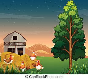農場, hays, グループ, 鶏